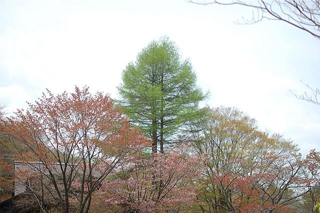 六甲山高山植物園〜六甲山カンツリーハウス