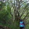 大阪日帰り初心者ハイキング生駒山。コース途中に自販機なし飲料水はたくさん持って行きましょう