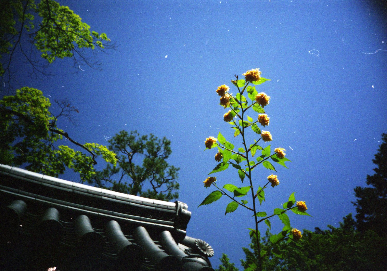 LOMO with AGFA ULTRA 続編