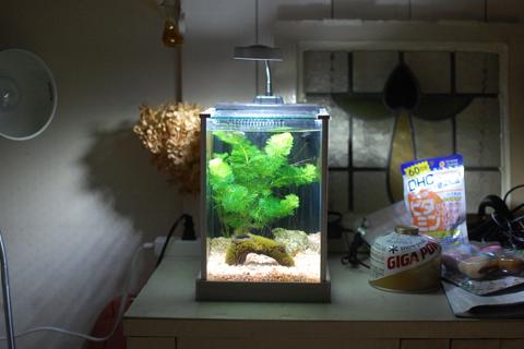 【28日目のクロメダカ】IKEAで水槽台購入そして60cm水槽の立ち上げ