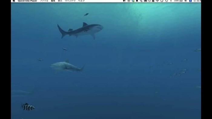 デスクトップ上をサメが泳ぎまわる!mac甩無料アプリSharks 3Dが素晴らしい