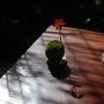 【インテリア】今、人気の卓上で育つ苔ミニ盆栽「石木花」で盆栽デビュー