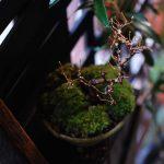 【けやき盆栽】新芽がでてきた。小枝の剪定と苔を張り替えて春を待つ