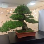 1億円の盆栽「雲龍」ほか必見の名品盆栽が集結したBONSAIフェスティバルに行ってきた