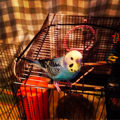 foo_2011-11-23-01.JPG