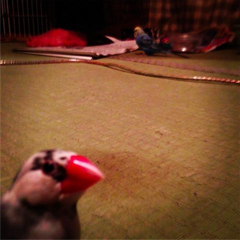 foo_2011-11-23-04.JPG
