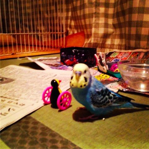 foo_2011-11-23-06.JPG