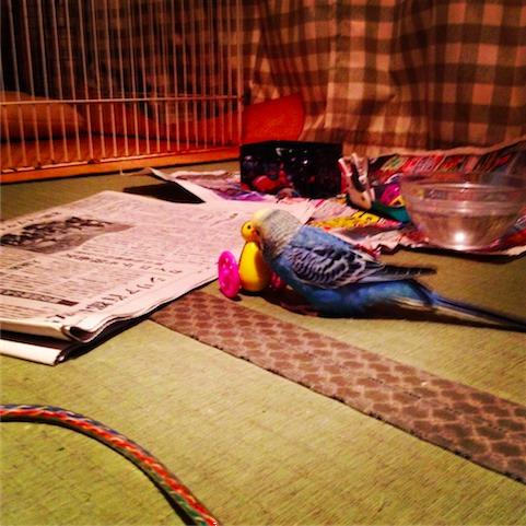 foo_2011-11-23-07.JPG