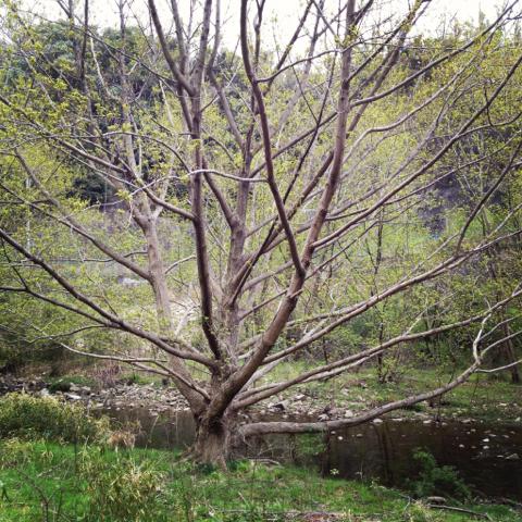 kikusui_2012-04-15_07.jpg