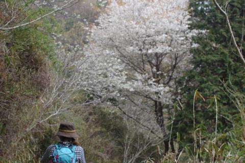 kikusui_2012-04-15_12.jpg