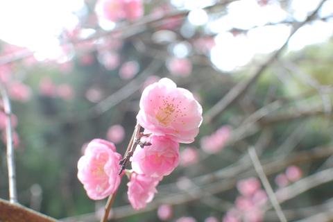 kikusui_2012-04-15_51.jpg