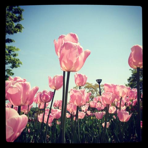lohas_2012-04-29_03.jpg