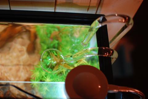 medaka_2012-09-30_04.jpg