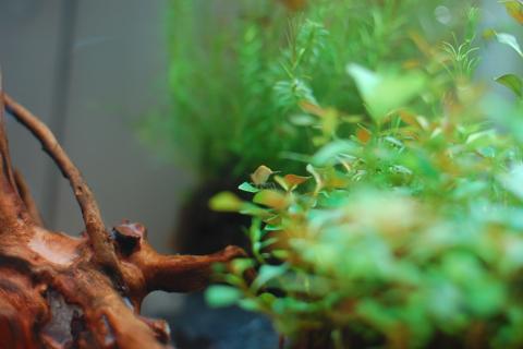 medaka_2012-10-03_10.jpg